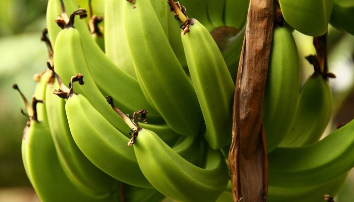 green_bananas