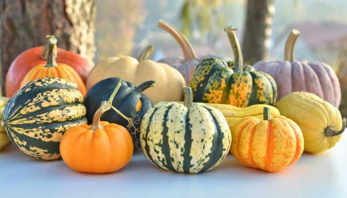 winter-squash-varieties-020217